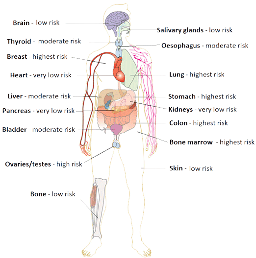 Organs of the human body labelled by their sensitivity to ionising radiation