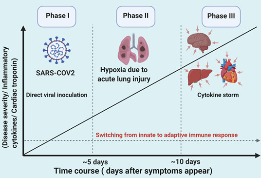 Three phases of COVID-19 infection